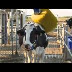 Embedded thumbnail for Tambo VMS Proyecto INTA DeLaval