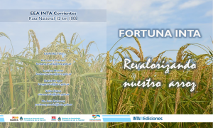 Boletin arroz Fortuna