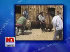 Embedded thumbnail for Feria de vellones y reproductores Linca
