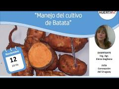 Embedded thumbnail for Manejo del cultivo de batata