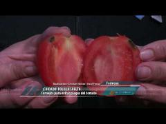 Embedded thumbnail for Consejos para evitar plagas del tomate