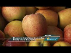 Embedded thumbnail for Colaciones escolares saludables