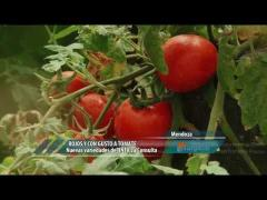 Embedded thumbnail for Tomates rojos y con gusto a tomate