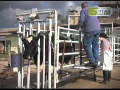 "Embedded thumbnail for Micro de TV ""5 minutos con el INTA"": prototheca, mastitis por algas"