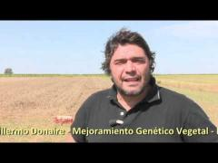 Embedded thumbnail for Video - INTA Marcos Juárez - Cereales de invierno de doble propósito