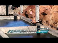 Embedded thumbnail for Carencia de minerales en aguas y forrajes