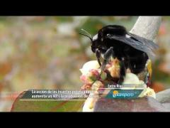 Embedded thumbnail for Insectos: drones de la naturaleza
