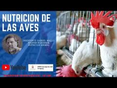 Embedded thumbnail for Conferencias Técnicas: Nutrición de aves