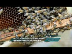 Embedded thumbnail for Creciendo junto a las abejas
